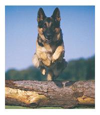 20071205jumpingdog.jpg
