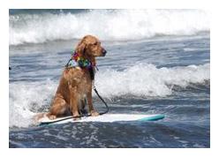 20080701surfdog.jpg