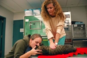 PET FIRST AID BLOG