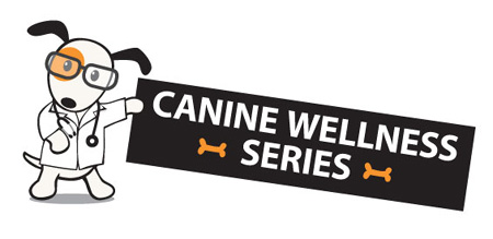 In celebration of National Pet Wellness Month, Southpaws Playschool  is hosting a Canine Wellness Series at 2324B South Lamar Boulevard.