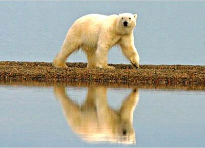 bear600.jpg
