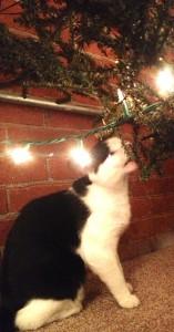chap tree 2