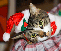 Christmas gifts for cats, dogs, and their people