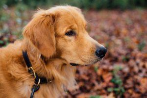 dog-1082307_1920