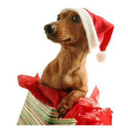 Christmas gifts for cats and dogs. Pet first aid, pet health insurance, and getting active with your pets are great Christmas gifts.