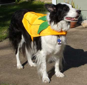 Dog costume contest. Win a Halloween costume for your dog or cat