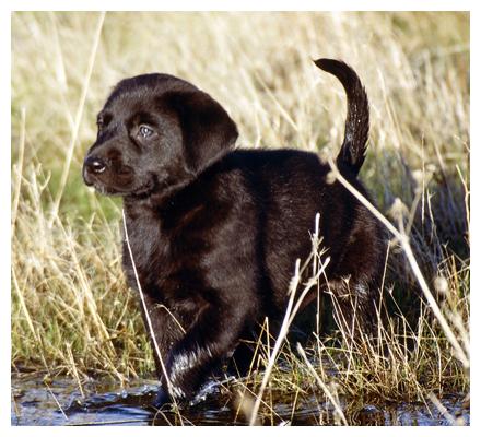 Dog Breeds List Announced By American Kennel Club Photo | Dog Breeds ...