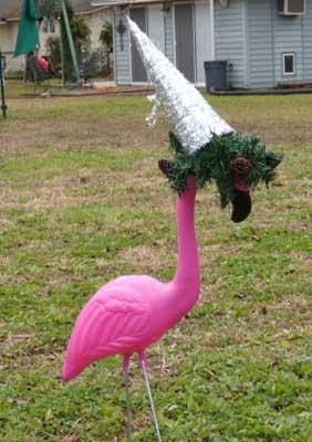 flamingo-solo