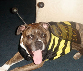 How to keep pets safe on Halloween