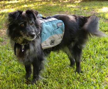 dog product review - the outward hound doggie backpack