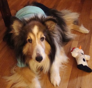Lost dog Rosemount, Minnesota