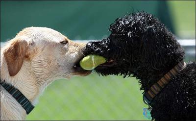 omaha-dog-daycare-2009-06
