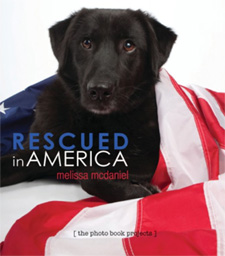 Rescued in America, the photo book projects, raising money for rescued dogs and shelter dogs