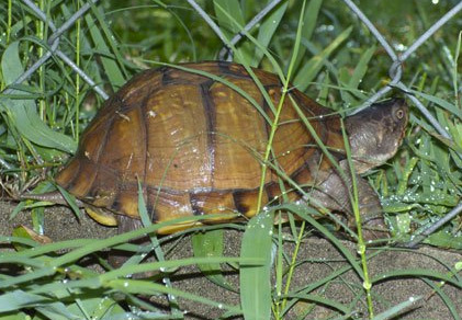 World Turtle Day, May 23, 2010